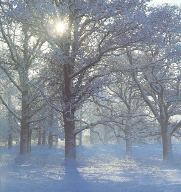 sun_snow_oak.jpg