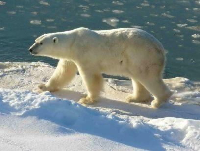 polar-bear-watching-and-ecotourism.jpg